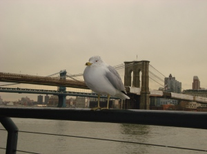 Brooklyn Bridge with seagull.